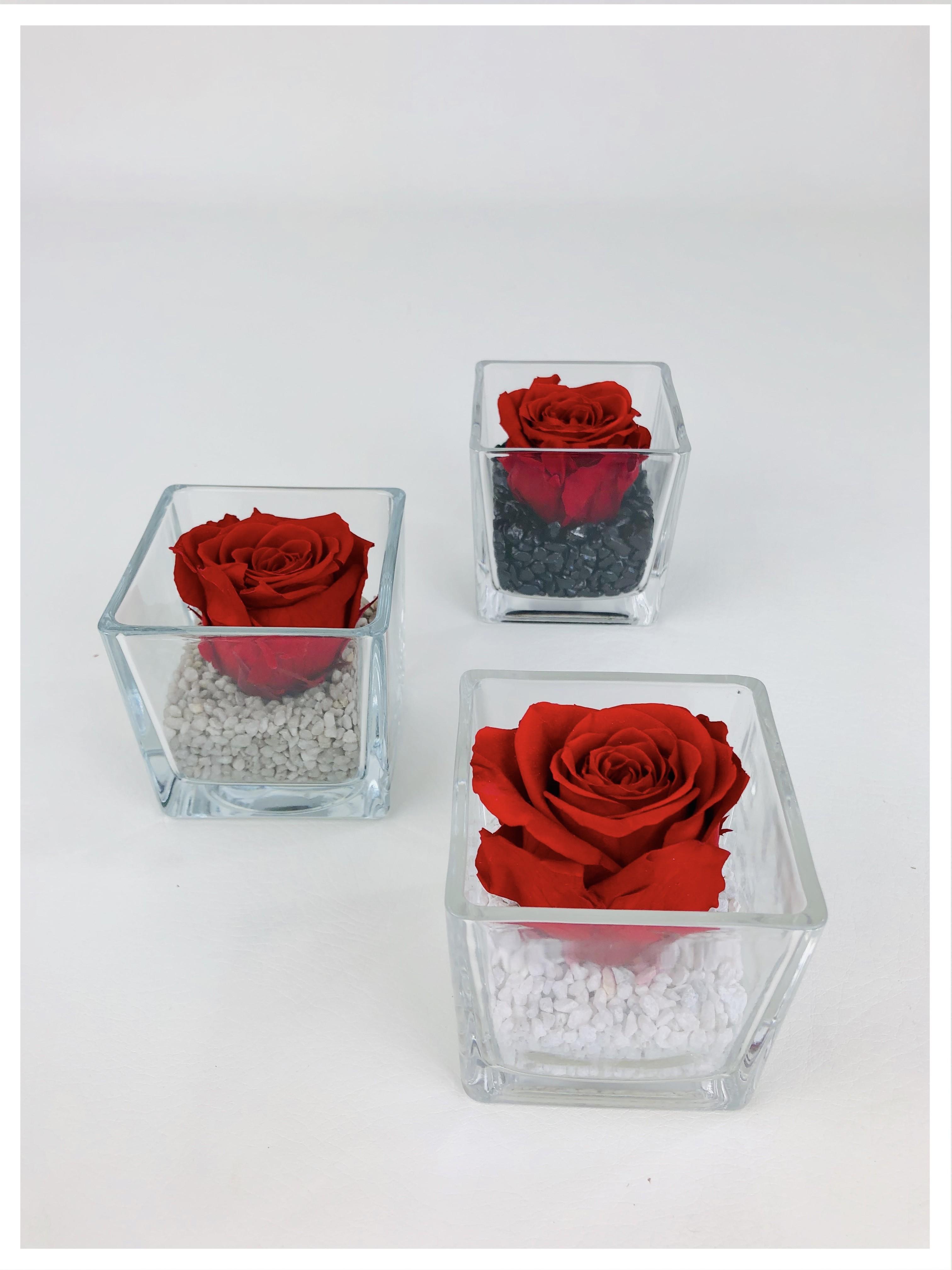 Le cube - Composition de rose stabilisée rouge