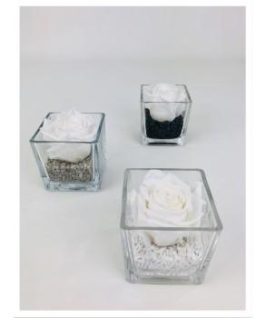 Le cube - Composition de rose stabilisée blanche