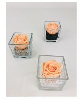 Le cube - Composition de rose stabilisée pêche