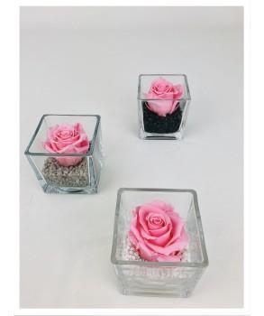 Le cube - Composition de rose stabilisée rose