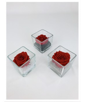 Le cube Xl - Composition de rose stabilisée rouge