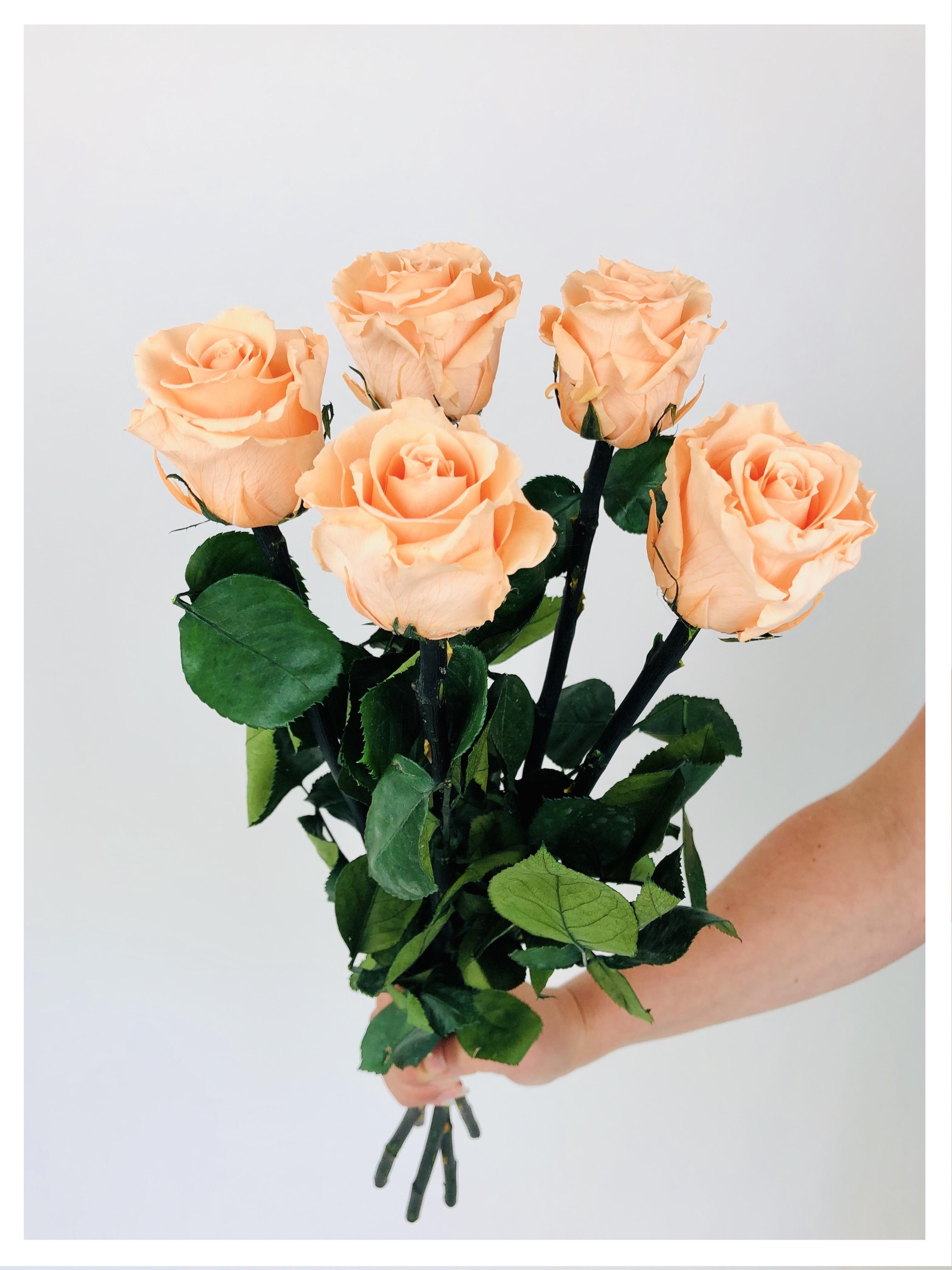 Roses stabilisées pêches