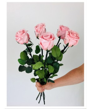 Roses stabilisées roses