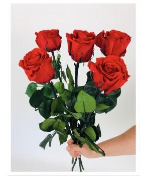 Roses stabilisées rouges
